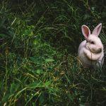 Wielkanocne rabaty